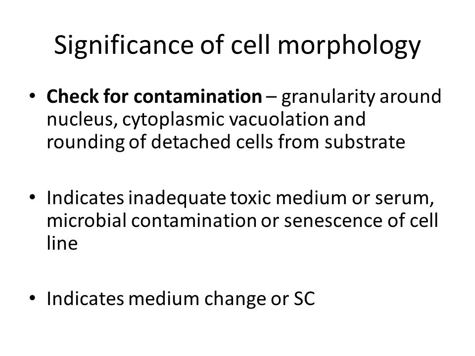 Significance of cell morphology