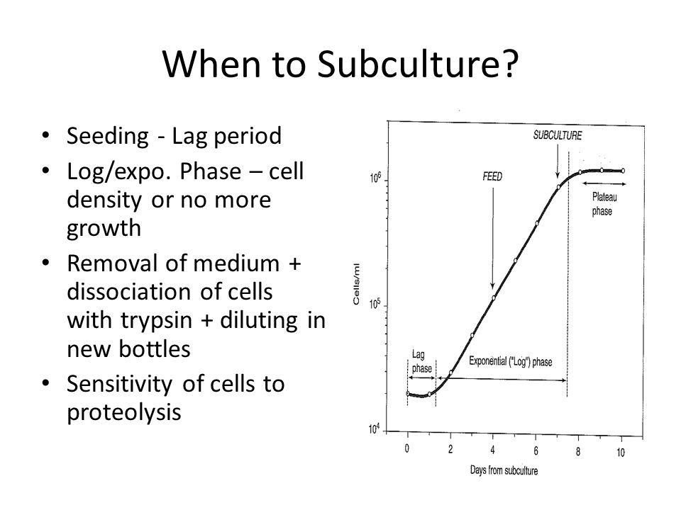 When to Subculture Seeding - Lag period