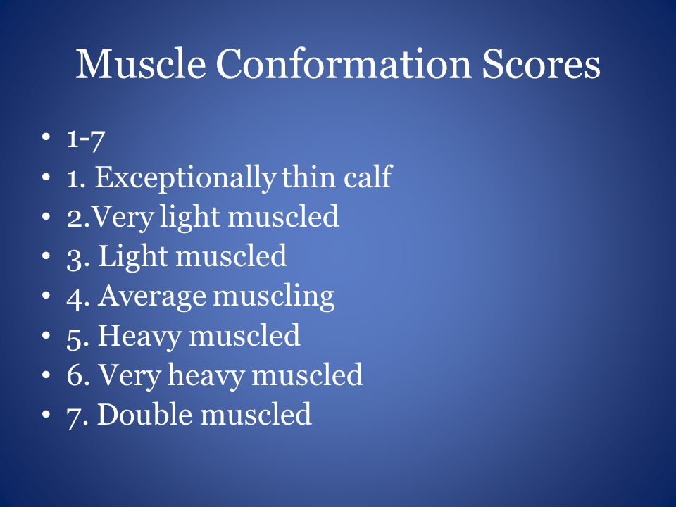 Muscle Conformation Scores