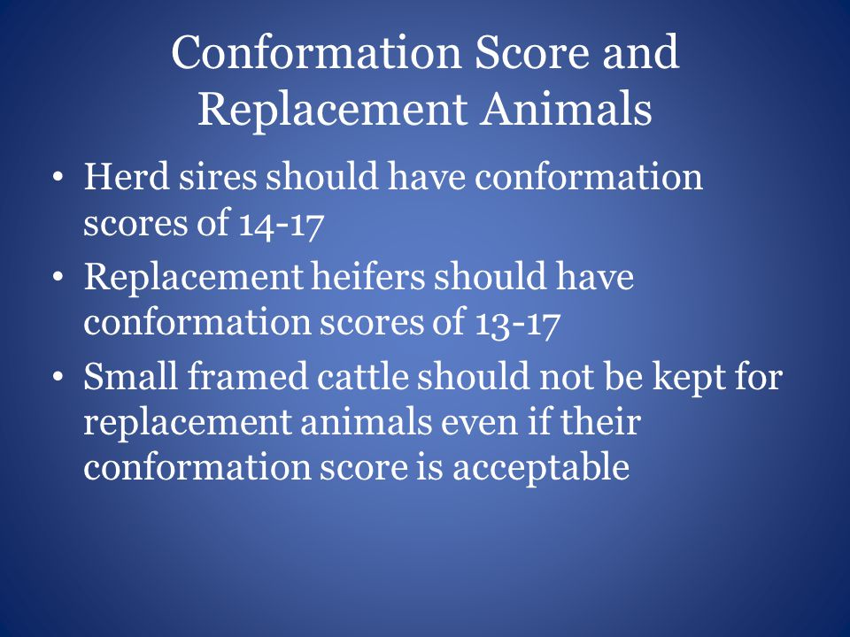 Conformation Score and Replacement Animals