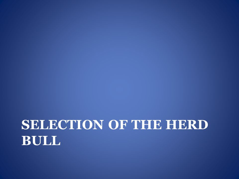 Selection of the Herd Bull