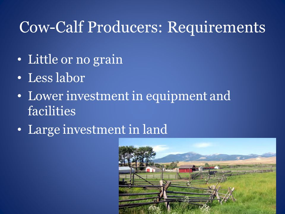 Cow-Calf Producers: Requirements