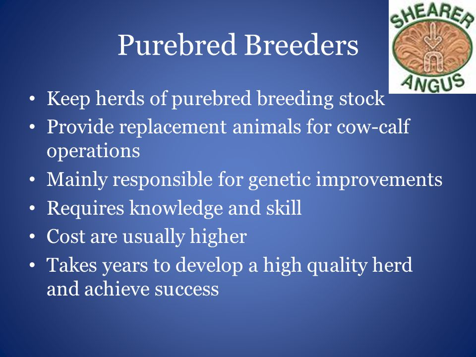 Purebred Breeders Keep herds of purebred breeding stock