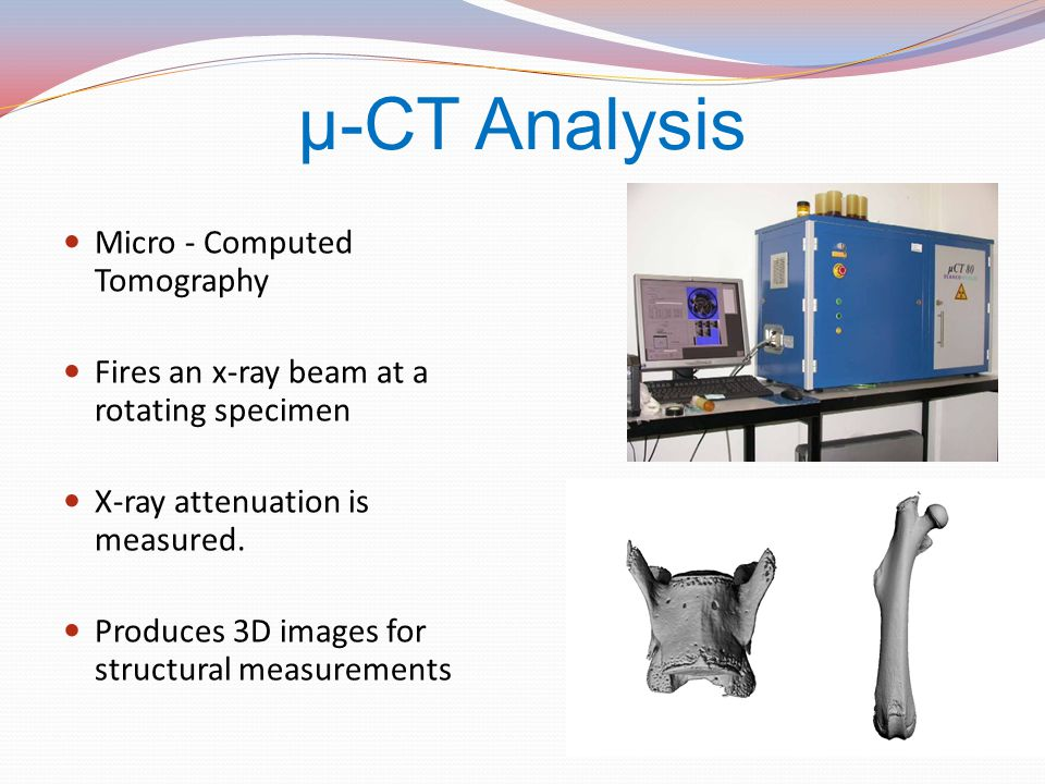 µ-CT Analysis Micro - Computed Tomography