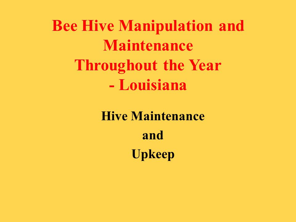 Bee Hive Manipulation and Maintenance Throughout the Year - Louisiana