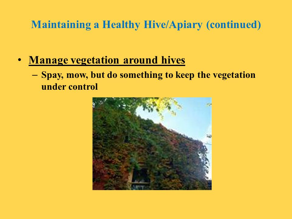 Maintaining a Healthy Hive/Apiary (continued)