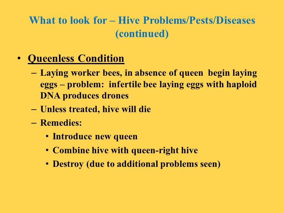 What to look for – Hive Problems/Pests/Diseases (continued)