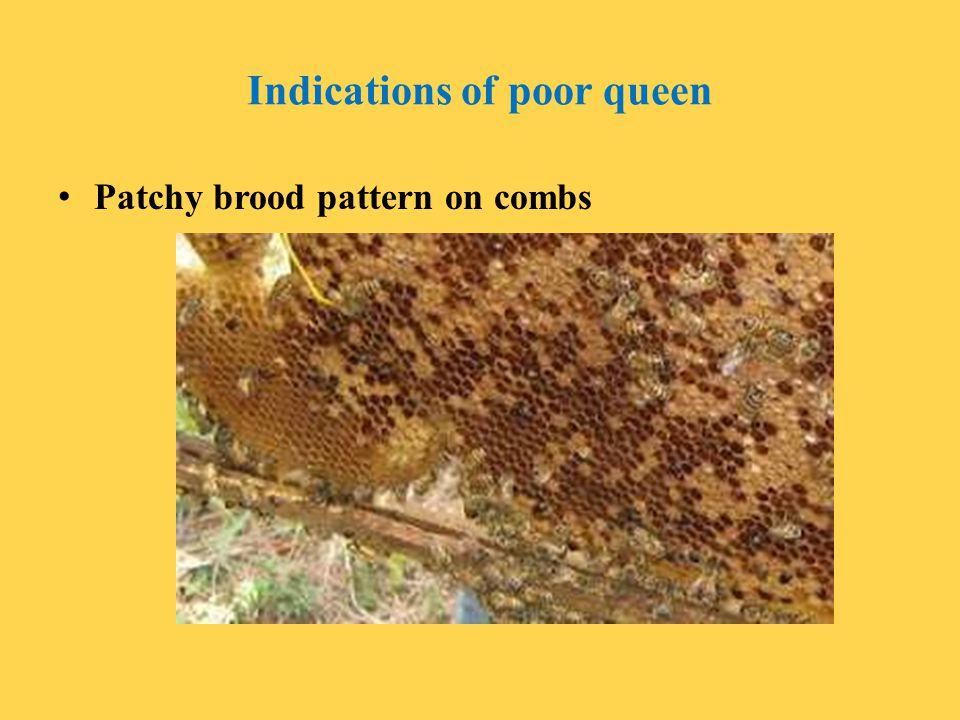 Indications of poor queen