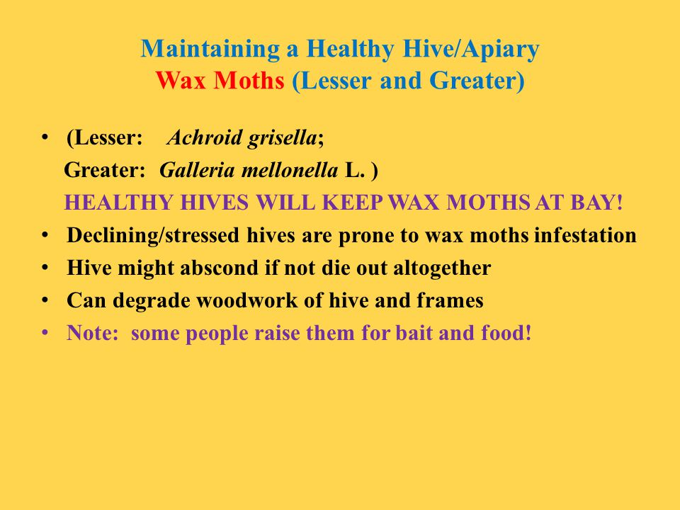 Maintaining a Healthy Hive/Apiary Wax Moths (Lesser and Greater)