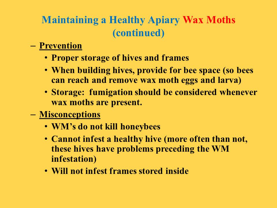 Maintaining a Healthy Apiary Wax Moths (continued)