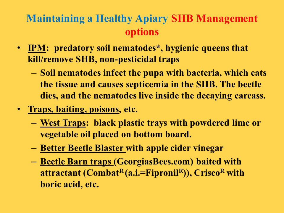 Maintaining a Healthy Apiary SHB Management options