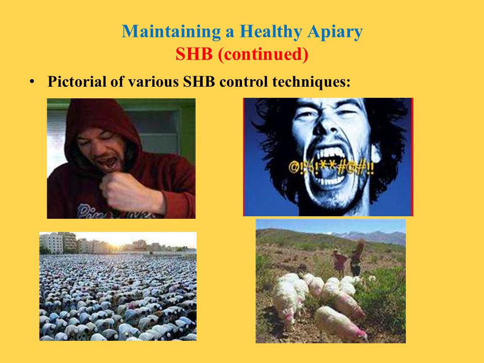 Maintaining a Healthy Apiary SHB (continued)
