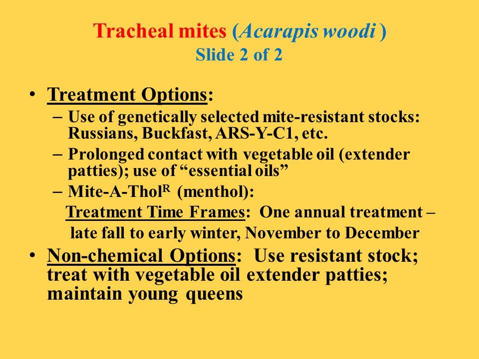 Tracheal mites (Acarapis woodi ) Slide 2 of 2