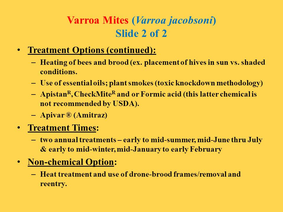Varroa Mites (Varroa jacobsoni) Slide 2 of 2