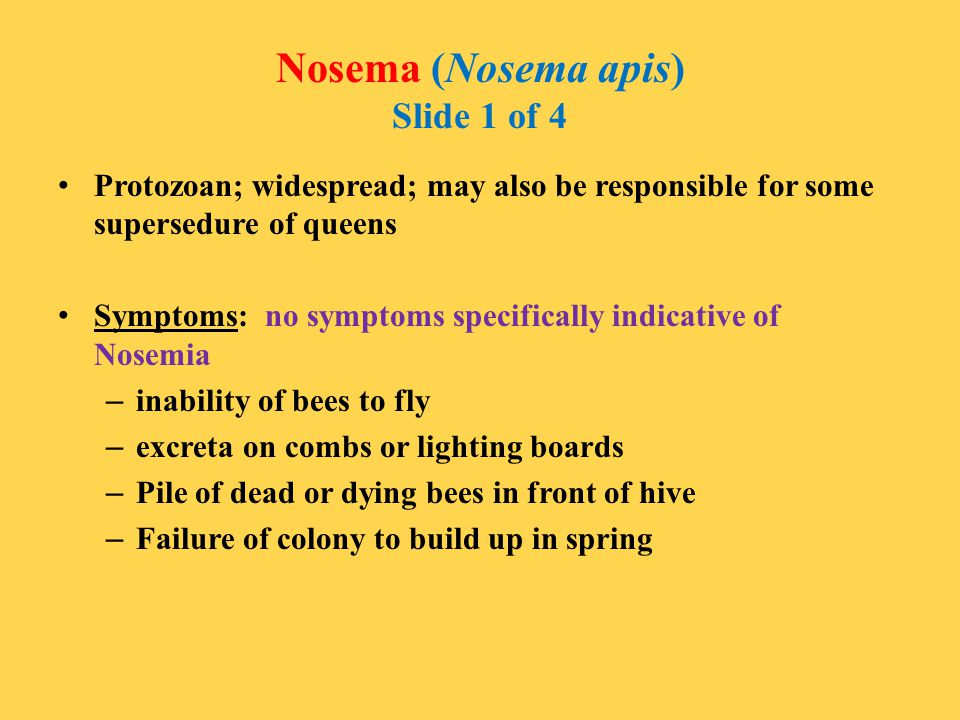 Nosema (Nosema apis) Slide 1 of 4