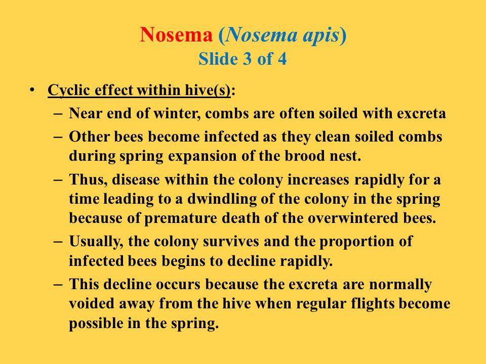 Nosema (Nosema apis) Slide 3 of 4