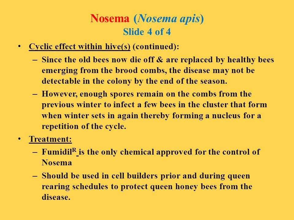 Nosema (Nosema apis) Slide 4 of 4