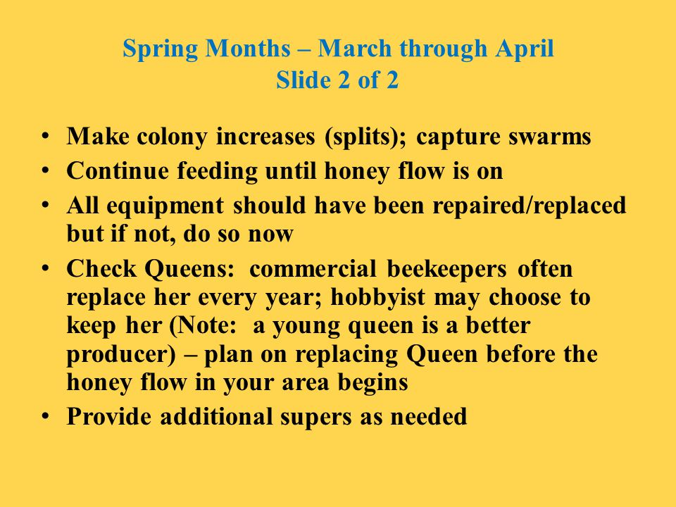 Spring Months – March through April Slide 2 of 2
