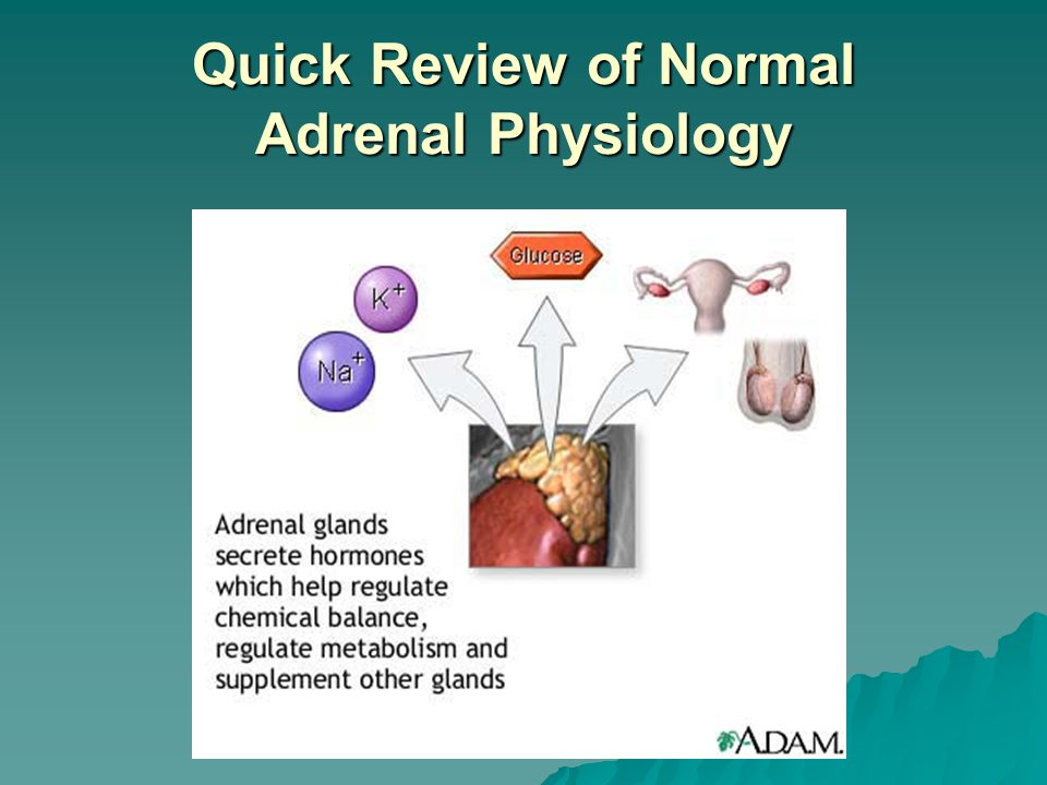 Quick Review of Normal Adrenal Physiology