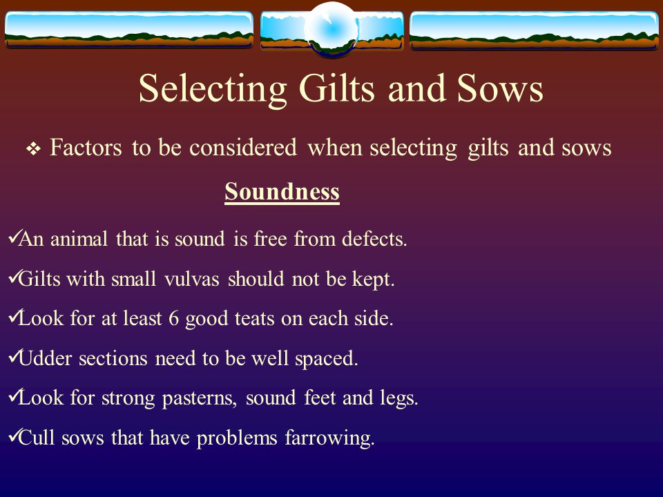 Selecting Gilts and Sows