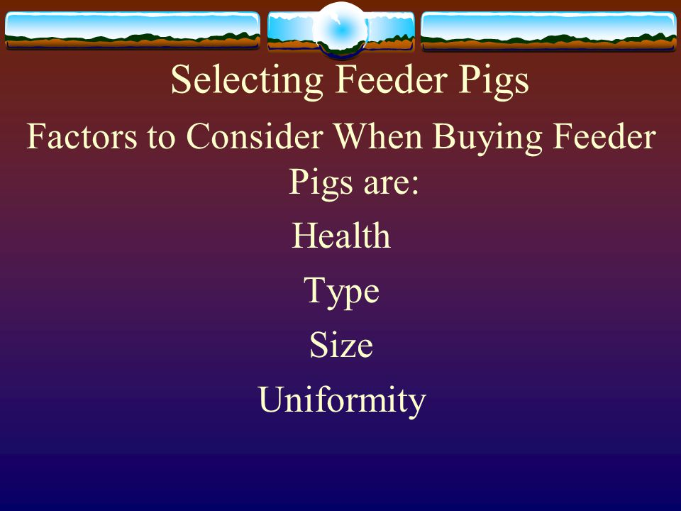 Factors to Consider When Buying Feeder Pigs are: