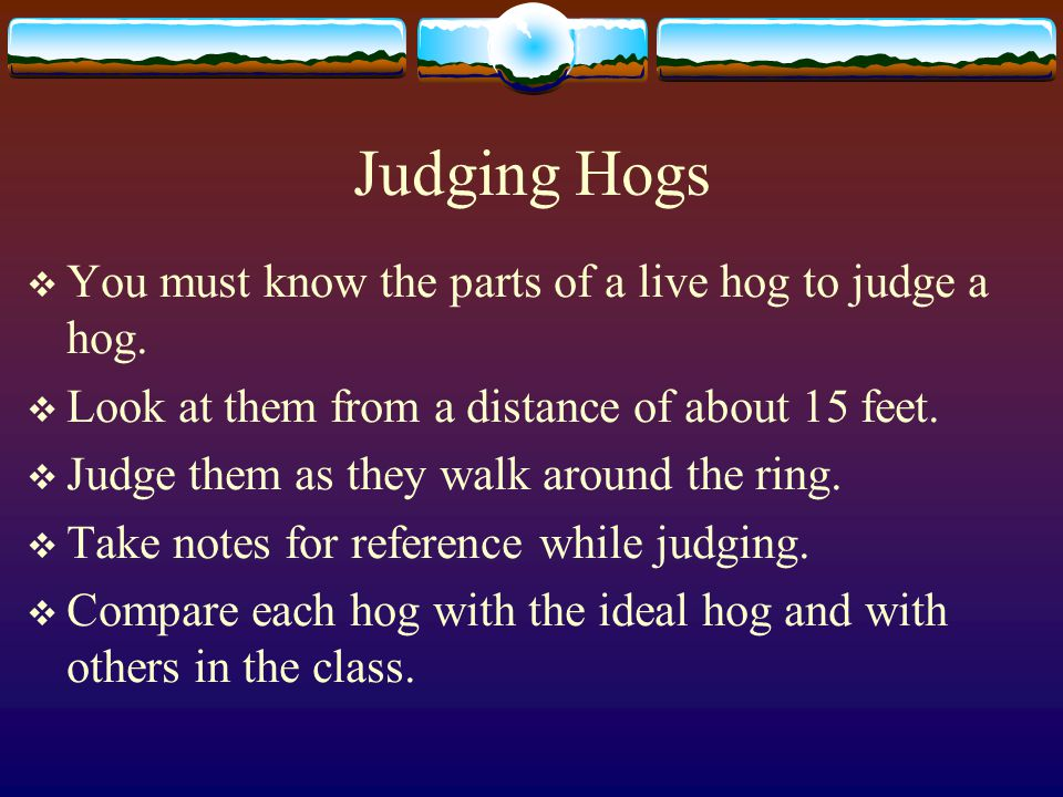 Judging Hogs You must know the parts of a live hog to judge a hog.