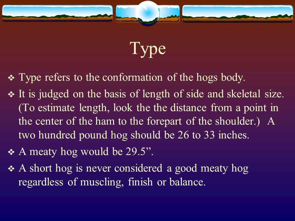 Type Type refers to the conformation of the hogs body.