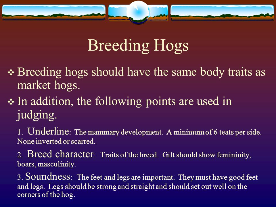 Breeding Hogs Breeding hogs should have the same body traits as market hogs. In addition, the following points are used in judging.