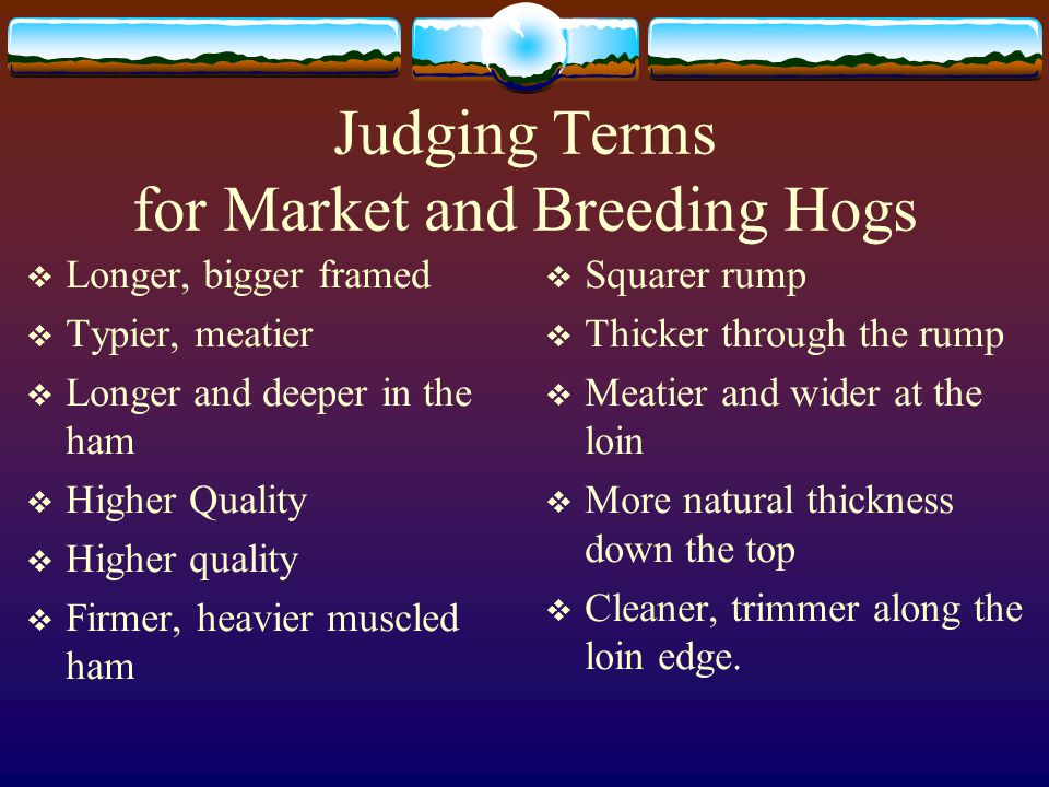 Judging Terms for Market and Breeding Hogs