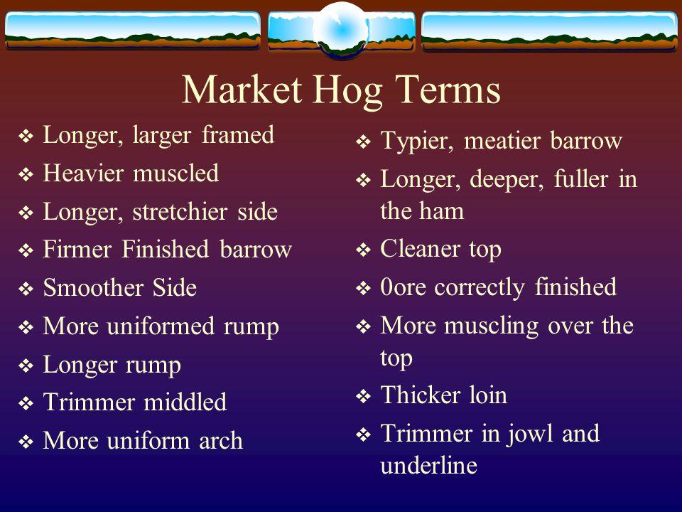 Market Hog Terms Longer, larger framed Typier, meatier barrow