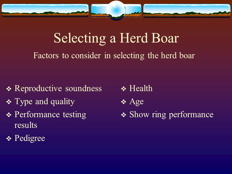 Factors to consider in selecting the herd boar