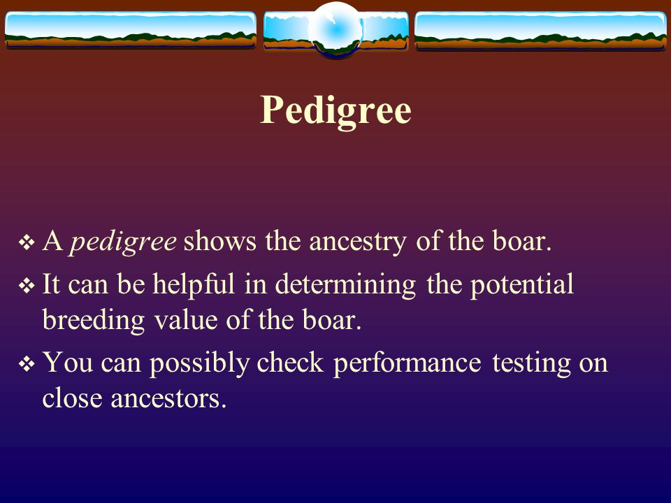 Pedigree A pedigree shows the ancestry of the boar.
