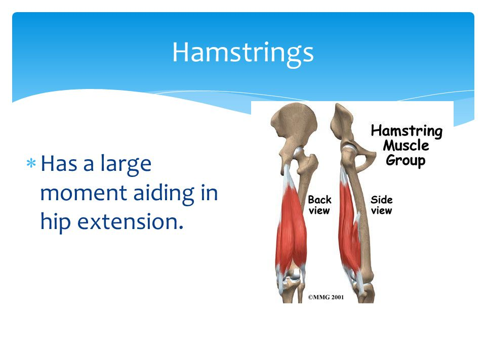 Hamstrings Has a large moment aiding in hip extension.