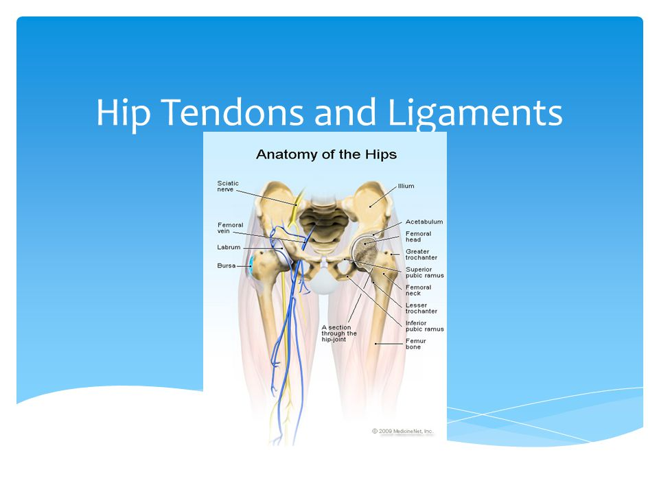 Hip Tendons and Ligaments