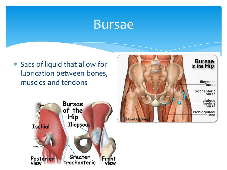 Bursae Sacs of liquid that allow for lubrication between bones, muscles and tendons
