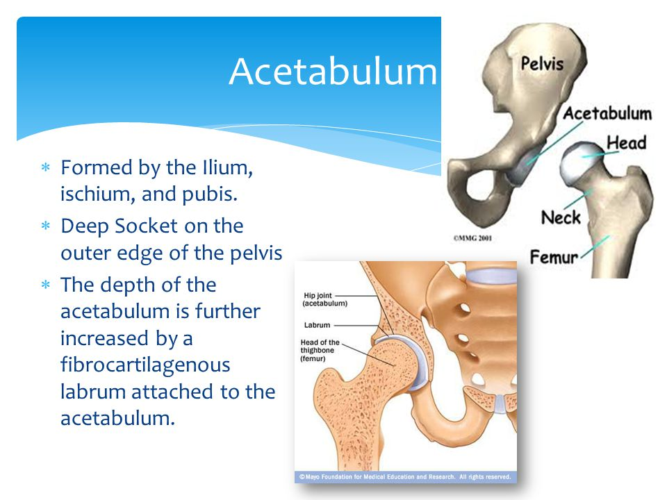 Acetabulum Formed by the Ilium, ischium, and pubis.