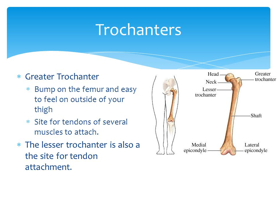Trochanters Greater Trochanter