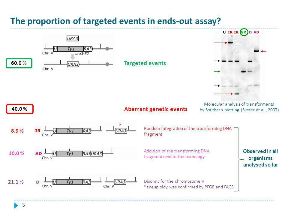 The proportion of targeted events in ends-out assay