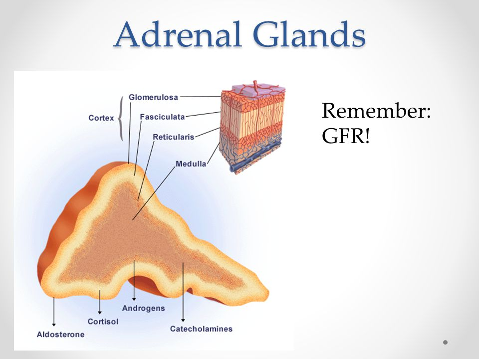 Adrenal Glands Remember: GFR!