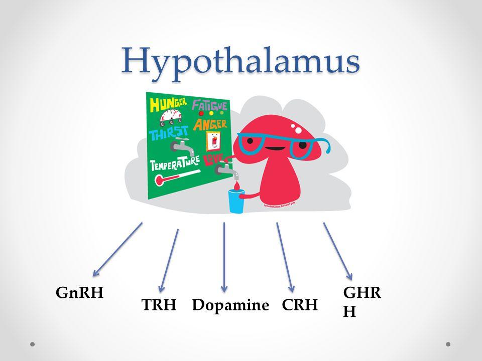 Hypothalamus GnRH GHRH TRH Dopamine CRH
