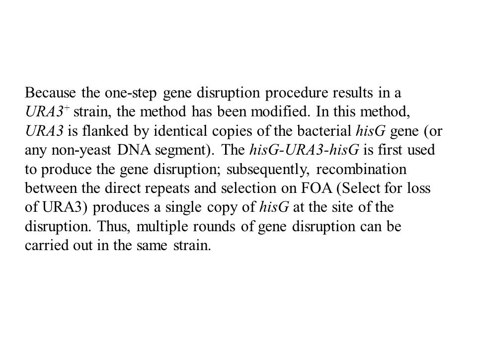 Because the one-step gene disruption procedure results in a URA3+ strain, the method has been modified.