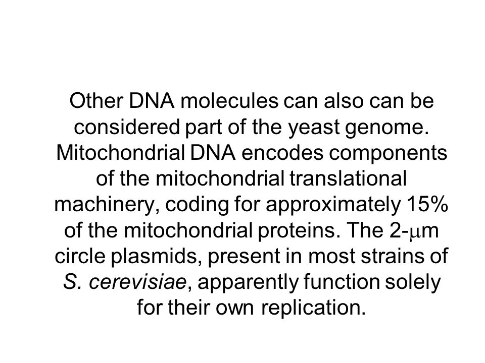 Other DNA molecules can also can be considered part of the yeast genome.