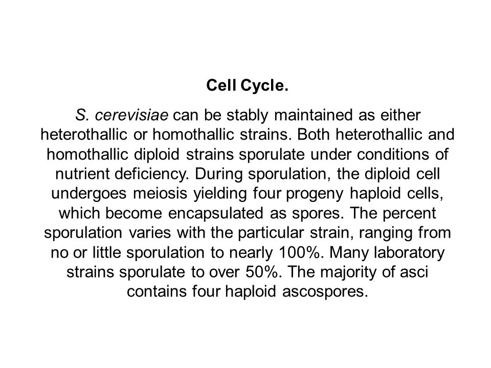 Cell Cycle.