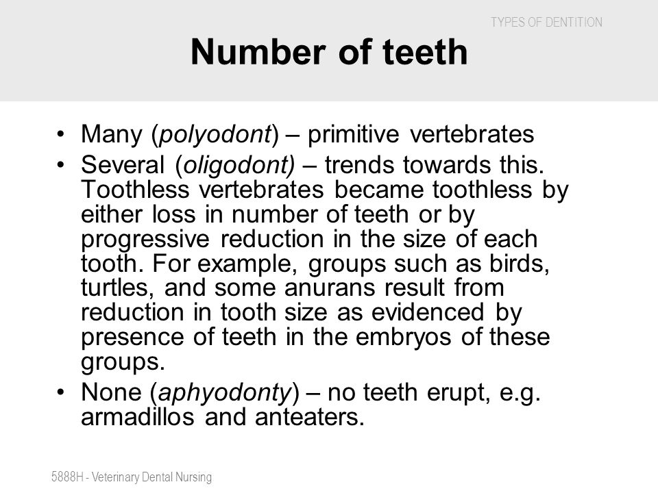 Number of teeth Many (polyodont) – primitive vertebrates