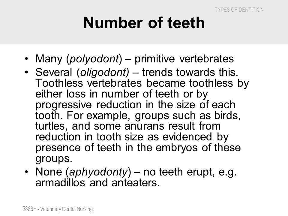 Number of teeth Many (polyodont) – primitive vertebrates