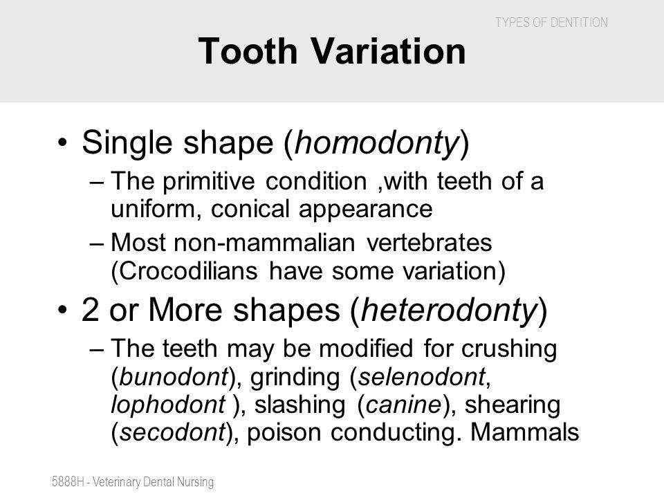Tooth Variation Single shape (homodonty)