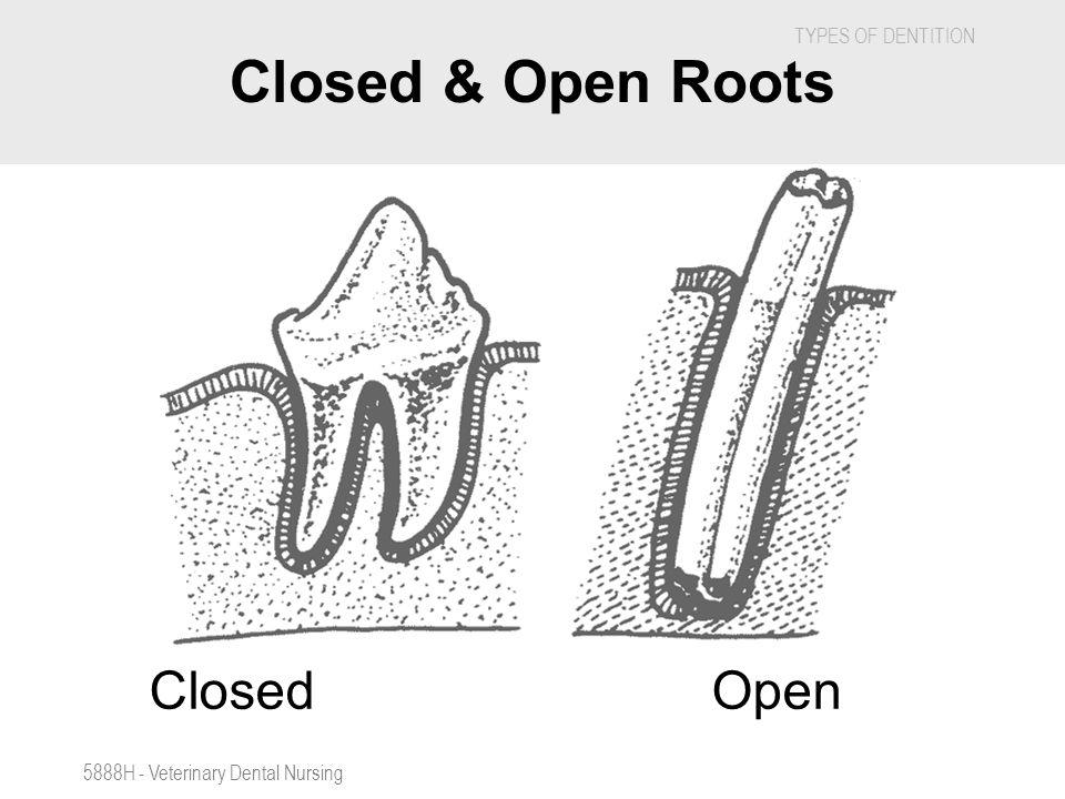 Closed & Open Roots Closed Open 5888H - Veterinary Dental Nursing