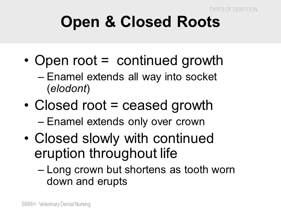 Open & Closed Roots Open root = continued growth