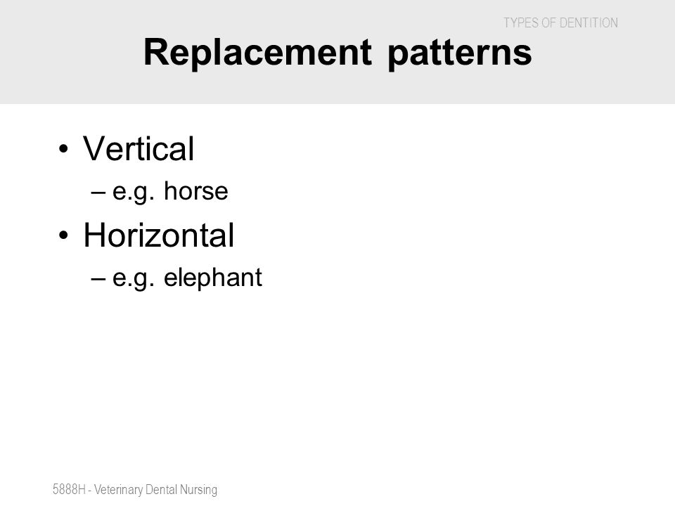 Replacement patterns Vertical Horizontal e.g. horse e.g. elephant