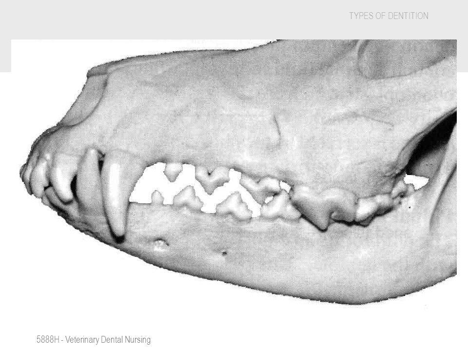 5888H - Veterinary Dental Nursing